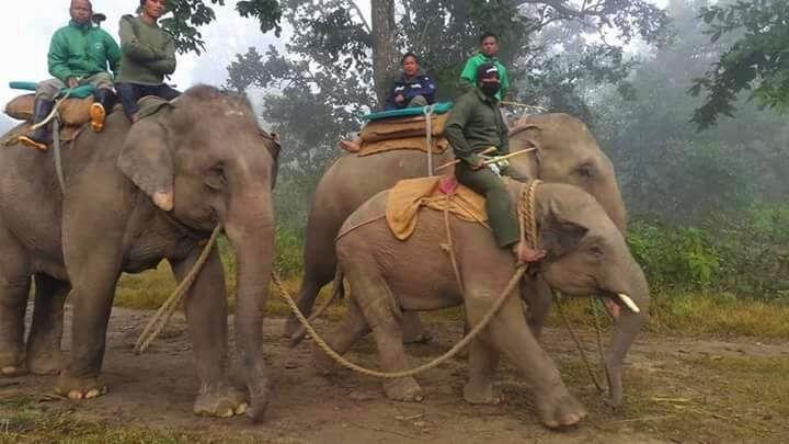 nepal-chitwan-national-park-elephant-patrol