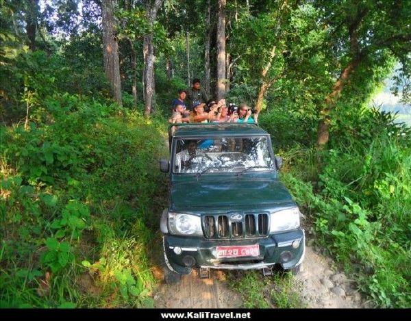 chitwan-national-park-jeep-safari-nepal