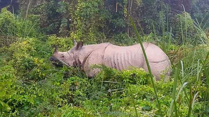 chitwan-national-park-nepal-rhino