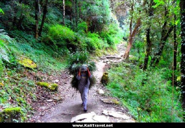 nepal-poon-hill-trek-ulleri-ghorepani