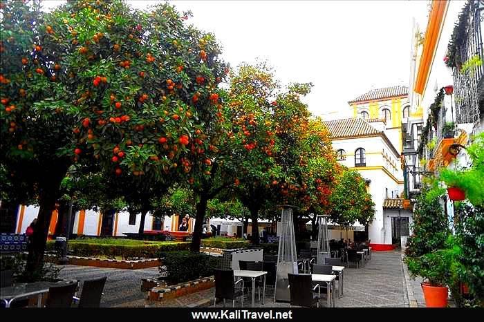 Orange en sevilla top img with orange en sevilla - Orange en sevilla ...
